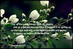 """""""For as the earth brings forth its shoots,     and as a garden causes what is sown in it to spring up, so the Lord God will cause righteousness and praise     to spring up before all the nations.""""  (Isaiah 61:11)"""