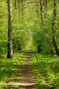 Sun-dappled forest path (Germany) by Bastian Kientz