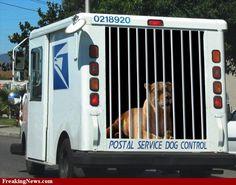 Postal Service Dog Control looks like a lion