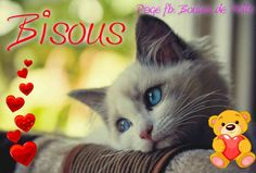 Bisous #bisous chats coeurs
