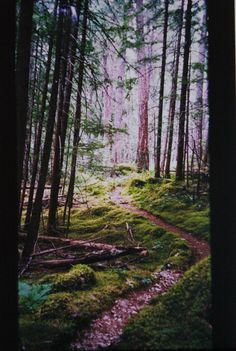 Big Beaver Trail, Ross Lake, Washington.