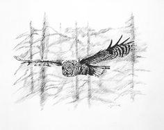 Grey Owl in flight - Lithographs of original pencil wildlife drawings
