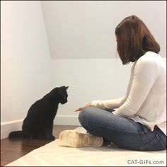 Amazing Cat GIF • Clever black cat doing awesome tricks with her owner King of high fives