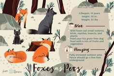 Infographics for Dotdash sites. Fox Eat, Grain Free Dog Food, Rodents, Fruits And Vegetables, Dog Food Recipes, Infographics, Behance, Fruits And Veggies, Infographic