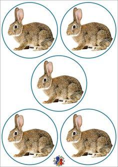 Numbers, Rabbit, Clip Art, Education, Thursday, Crafting, Bunny, Rabbits, Bunnies