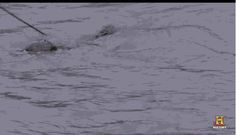 #funny name reaction gif alligator swamp people soon gator swamp animals http://ift.tt/1LBTHO8 - http://ift.tt/g8FRpY