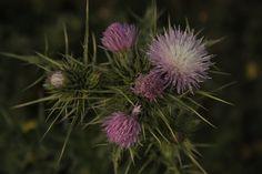 """500px / Photo """"wild purple"""" by Rossella Sferlazzo"""