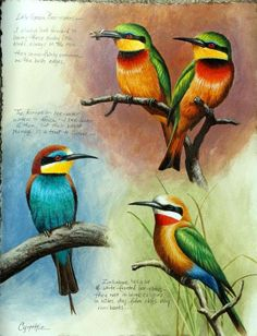Bee-eater Study<BR>9 x 12 acrylic on paper