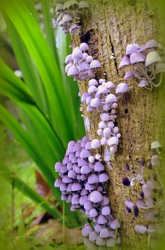 God's family of fungi are even pretty in their own right. Mushroom Art, Mushroom Fungi, Mushroom Seeds, Mushroom Species, Tiny Mushroom, Wild Mushrooms, Stuffed Mushrooms, Tree Mushrooms, Mushroom Pictures