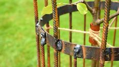Skydda ditt nyplanterade äppelträd mot hungriga harar   Hobby och hantverk   svenska.yle.fi Bird Feeders, Washer Necklace, Garden, Outdoor Decor, Garten, Lawn And Garden, Gardens, Gardening, Outdoor