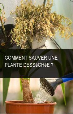 Comment sauver une plante desséchée ? #Plante #Comment Permaculture, Houseplants, Ethnic Recipes, Bio, Bouquets, Garden Ideas, Gardens, Container Gardening, Tips And Tricks