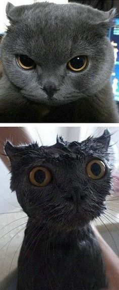 """Funny Pictures - Baths traumatize even the coolest cats. The top looks like Toothless from """"How to train your dragon,"""""""