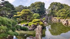 The gardens at Nijo Castle. We were unable to take photos inside the palace, but you could easily hear the chirping floors! . . .  #travel #japan #vacation #kyoto #nijocastle #nijojo #nightengalefloors #antiassassin #chirpingfloors #gardens #japanesegarden