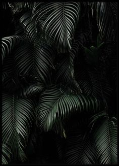 Dark Green Palm Leaves Poster in the group Prints / Floral at Desenio AB Black Phone Wallpaper, Palm Wallpaper, Poster Shop, Print Poster, Desenio Posters, Gold Poster, Jungle Life, Online Posters, Social Media