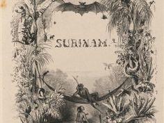 Monkey Type / Surinam (Benoit 1839)