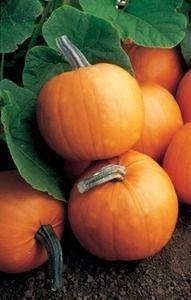 Pase Seeds - Pumpkin Orange Smoothie Vegetable Seeds, $9.99 (http://www.paseseeds.com/pumpkin-orange-smoothie-vegetable-seeds/)