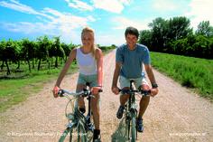 Stegersbach bietet wunderschöne Radfahrstrecken ...  E-Bikes und viele andere Modelle werden direkt im Haus angeboten.  Starten Sie Ihren Tag direkt im Thermenhotel PuchasPLUS**** Stegersbach. Hotels, Globetrotter, Bicycle, Bike Rides, Road Trip Destinations, Explore, Viajes, House, Bike