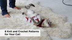 It's Love Your Pet Day! Go behind the scenes at our kitty photoshoot & get 8 cat-friendly patterns!