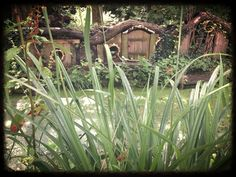 Butterfly World Stratford Upon Avon: Nineteen