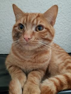 Cupid the ginger cat disappeared without a trace