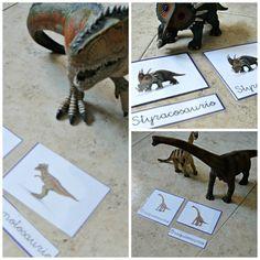 Free nomenclature cards montessori dinos
