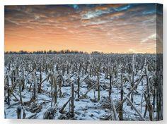 Sky on Fire [cornfield in winter] by Garvin Hunter Buy Canvas, Canvas Wall Art, Art Prints For Sale, Art For Sale, Online Art Store, Farm Art, Popular Art, Fine Art America, Cool Photos