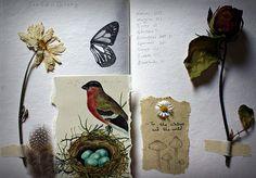 Field diary. by -daughterofelfin- #flickstackr  Flickr: http://flic.kr/p/8zW4CM