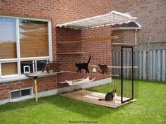 Don't want your kitty to get lost outside but still breathe fresh air and enjoy sunlight? A cat enclosure is the best solution! Catios also help to keep . I Love Cats, Crazy Cats, Cool Cats, Cage Chat, Dog Enclosures, Outdoor Cat Enclosure, Cat Cages, Cat Run, Photo Chat