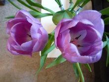 Mon bouquet à moi #tulipe #diy