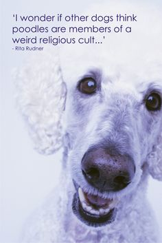 """""""I wonder if other dogs think poodles are members of a weird religious cult..."""" - Rita Rudner"""