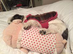 lexy with piggy pillow