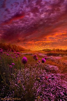 Phil Koch - Google+