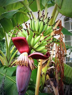 Cool Bananas...