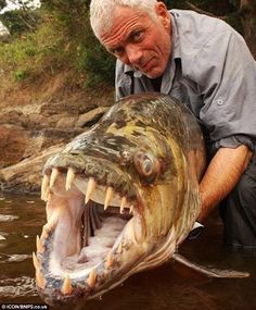 Goliath Tigerfish. A native of the Congo River basin, the Lualaba River, Lake Upemba and Lake Tanganyika in Africa, it's the largest member of the tigerfish clan, a genus of fierce predators with protruding, daggerlike teeth. Locals say it's the only fish that doesn't fear the crocodile and that it actually eats smaller ones. It's also been known to attack humans in rare instances.