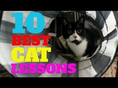 This Video Made Me Cry - 10 Best Lessons Learned From A Cat https://www.youtube.com/watch?v=aAachLOBQH4