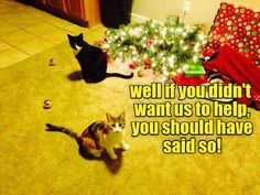meowy catmas here s some of our favorite holiday lolcats