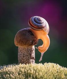 snail on fungi Fast Crazy Nature Deals. Sea Snail, Mushroom Fungi, Tier Fotos, Woodland Creatures, Beautiful Creatures, Pet Birds, Animal Pictures, Stuffed Mushrooms, Cute Animals