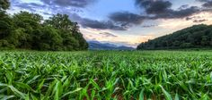 The Cornfield, Great Smoky Mountains, NC Mountain Vacations, Hdr Photography, Camera Reviews, Great Smoky Mountains, National Parks, Outdoor, Outdoors, Outdoor Games, Garden