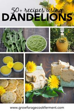 Dandelion flowers are edible and medicinal and have many uses! Here are 50 dandelion recipes for drinks sweets baked goods savory dishes bath and body and home remedies. Dandelion Jelly, Dandelion Flower, Dandelion Uses, Dandelion Recipes, Herb Recipes, Salad Recipes, Edible Wild Plants, Herbs For Health, Flower Food