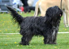Kuva Suvi Juutilainen Dogs, Animals, Animaux, Doggies, Animales, Animal, Pet Dogs, Dieren, Dog