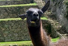 Peru Family Vacations- Travel together to  Cusco, the Sacred Valley, Machu Picchu and more!