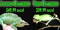 Reptile buy/supplies