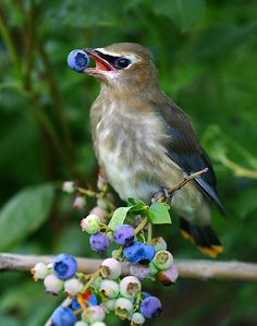 Planting Shrubs To Feed The Birds | www.coolgarden.me