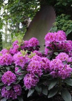 20 Shade Plants for Woodland Gardens |  By: Jessica Yonker |  Grow a lush, woodland garden with this selection of shade-loving shrubs, flowers and foliage. #LandscapeShrubs