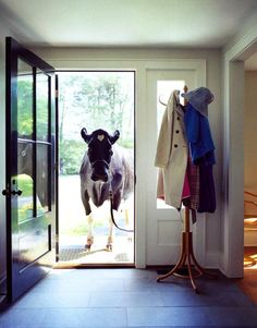 Why do I have a feeling this will happen at my home at some point in my life? Won't be a cow though...it'll be one of my horses..
