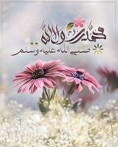 Blessed Friday, Reality Quotes, Morning Images, Beautiful Pictures, Plants, Blessings, Design, Qoutes, Islam