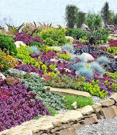 Stauden-Kollektion 'Rock Garden'
