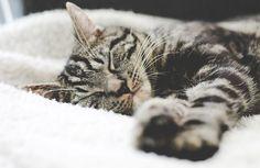 9 sätt att gömma kattlådan i hemmet (aldrig mer plastlåda i badrummet)