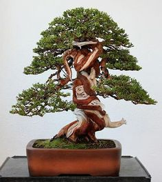 Bonsai Tree Types, Bonsai Trees, Juniper Bonsai, Bonsai Art, Ikebana, Amazing Nature, Garden Sculpture, Planter Pots, Things To Come