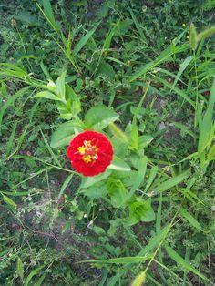 gros plan sur une petite fleur